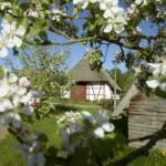 16_04_24_muess-blueht-zum-pflanzenmarkt-am-26042015-im-freilichtmuseum